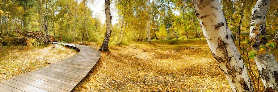 Woodside-Leisure-Walk
